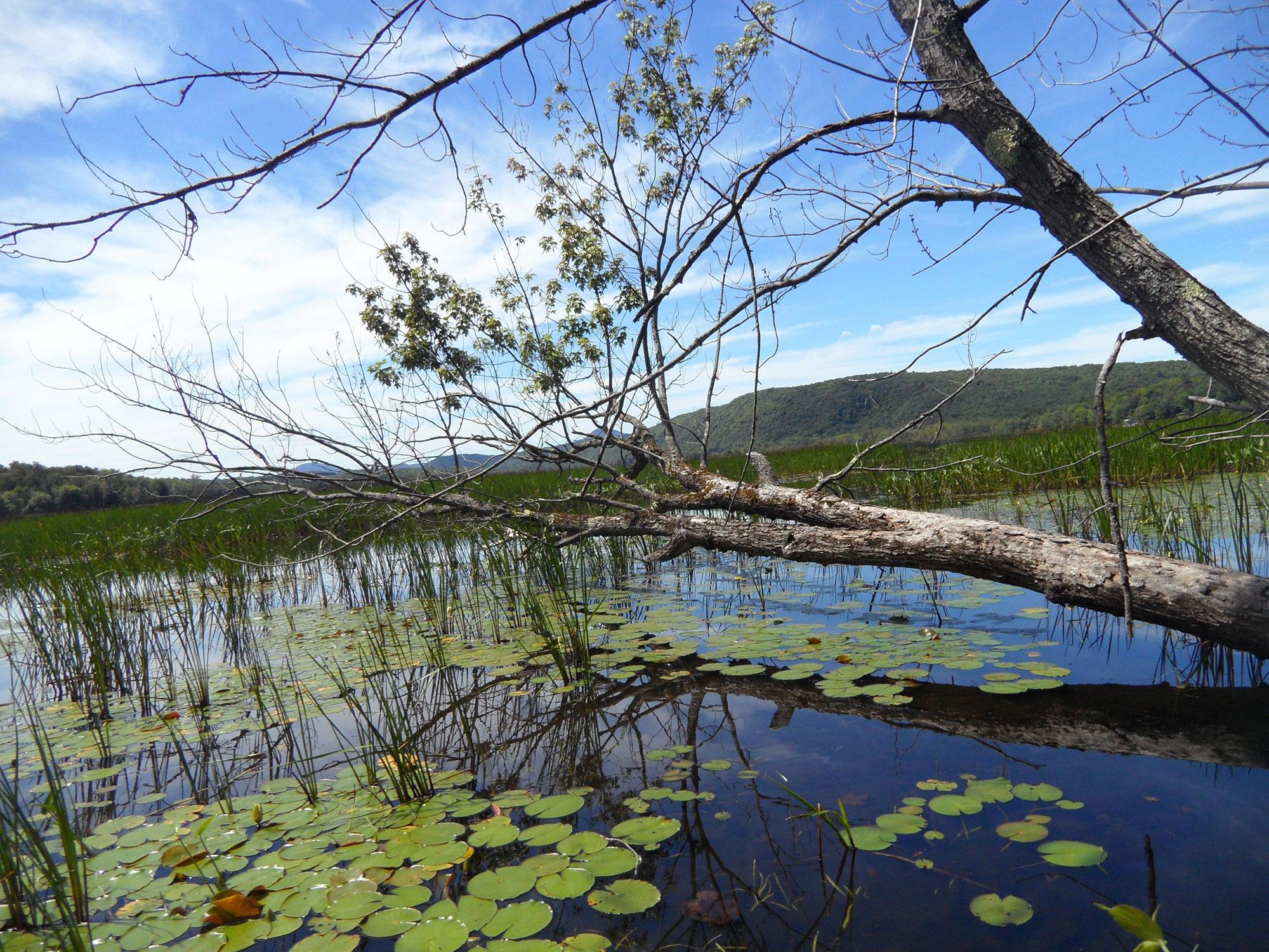 Aménagement de lac